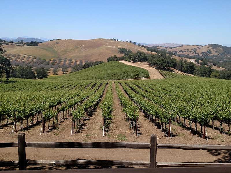Corporate Adventure Wine Tour Paso Robles, CA